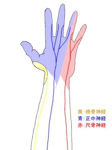 神経の支配領域